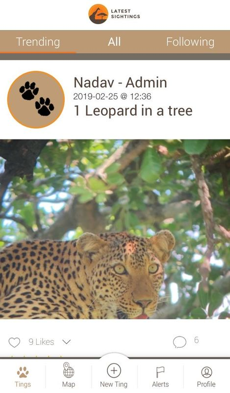 Latest Sightings leopard spotted